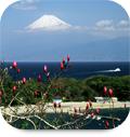 white_shikinouturi.jpg
